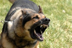 People Bitten By Police Dogs Sometimes Sue – and Win