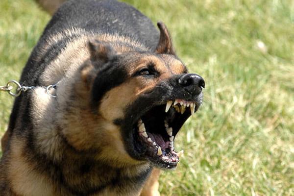 police dog bite